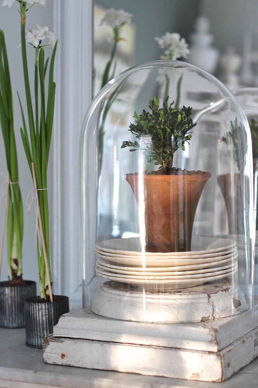 decor plantas estilo granja 24