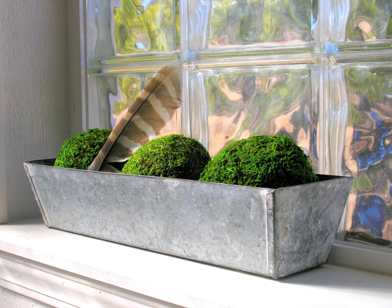 Ideas de Decoración de Plantas con Estilo Granja