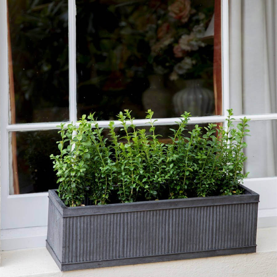 Ideas de Jardinera de Ventana para Alegrar su Hogar