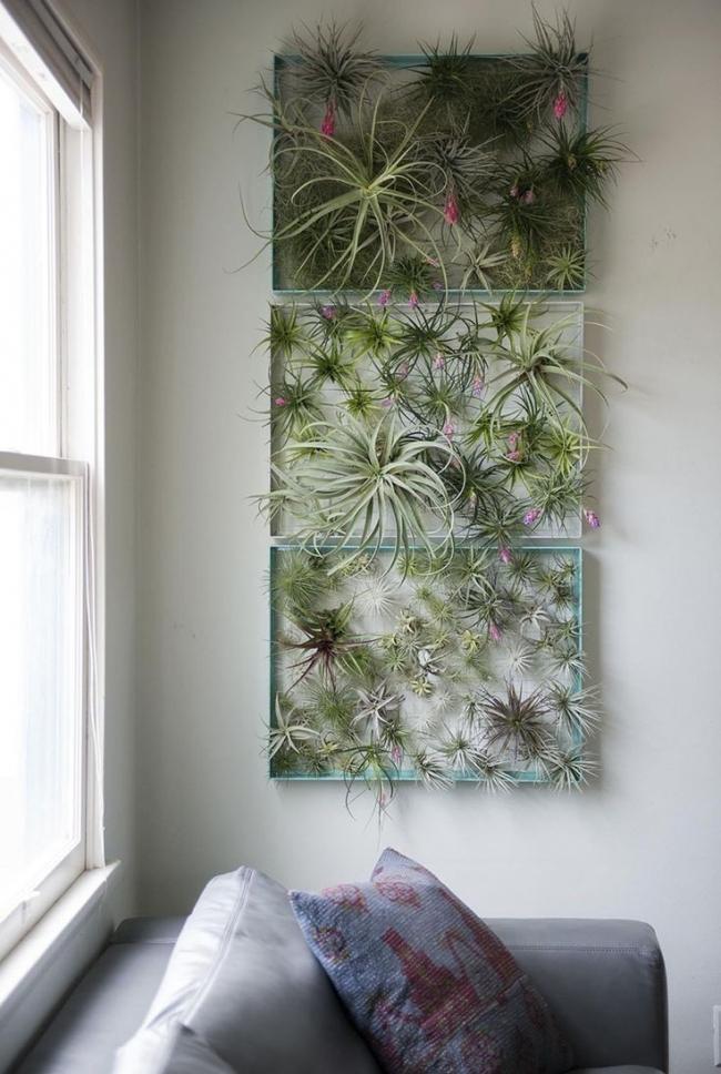 Formas Originales de Decorar tu Casa con Plantas de Aire